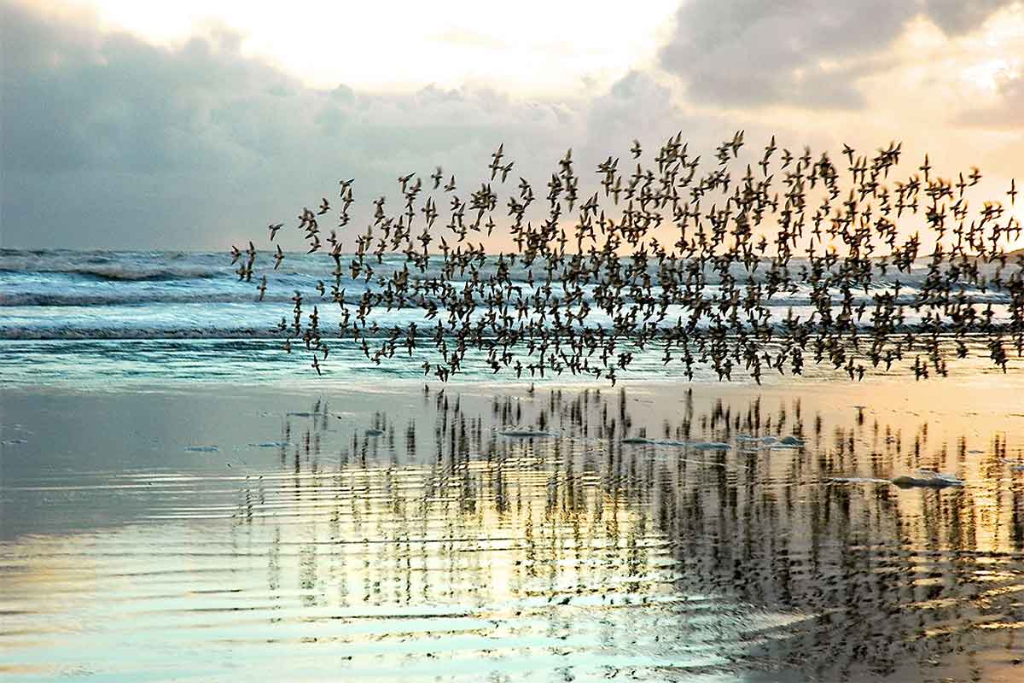 Tofino Ocean and Birds